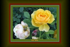 14 Types of Roses by Dr Reza Khalesi